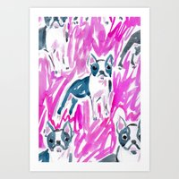 Boston Terrier Stare Art Print