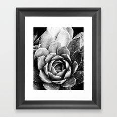 Rainsplashed Cactus Framed Art Print