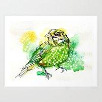 Australian Green Catbird  Art Print