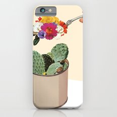 SUCCULENT iPhone 6 Slim Case