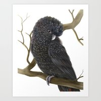 Glossy Black Cockatoo Art Print