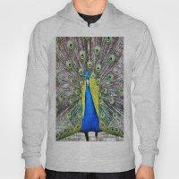 Peacock Display Hoody