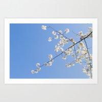 Sky Gazing, Nature Photography, Blossom Print, Blue Wall Art, Minimalist Spring Blossoms Art Print