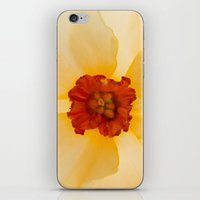 Golden Daffodil iPhone & iPod Skin