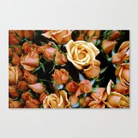 Rosebuds, Darling Rosebuds Canvas Print