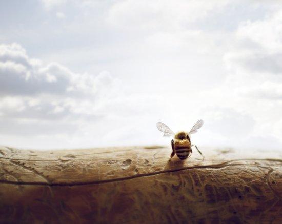 unbearable lightness of bee-ing Art Print