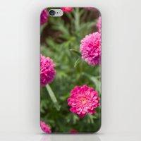 Reine Marguerite #1 iPhone & iPod Skin