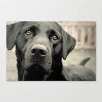 By a Nose Canvas Print