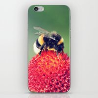 Bumble Bee on a Red Blossom iPhone & iPod Skin