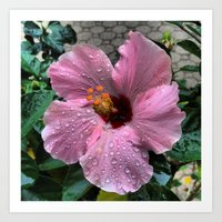 Raindrops on pink flower Art Print
