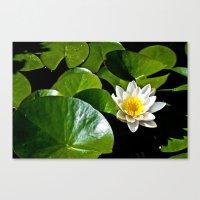 Pond Lilly Canvas Print