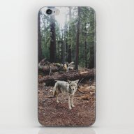 Injured Coyote iPhone & iPod Skin