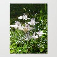 The Doves (Columbine) Canvas Print