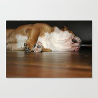 Lazy Bulldog Canvas Print