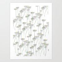 Camomile Flowers Art Print