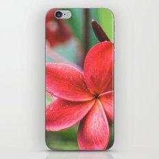 Soft Summer Plumeria iPhone & iPod Skin