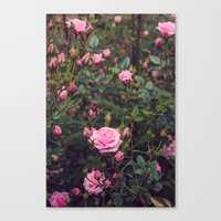 Sweet Summertime II Canvas Print