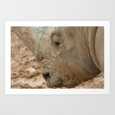Israeli Rhino Art Print