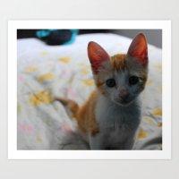 ORANGE CAT. Art Print