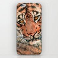Tiger portrait 884 iPhone & iPod Skin
