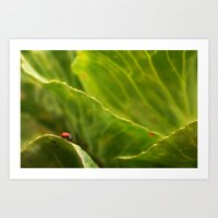 Lady Bug In Nature Art Print
