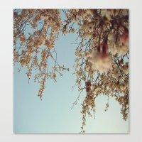 Cherry Blossoms 2 Canvas Print