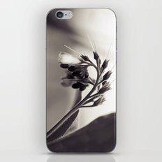 Field Dragon iPhone & iPod Skin