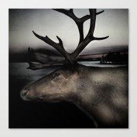 Tom Feiler Caribou Canvas Print