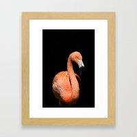 Flamingo III Framed Art Print