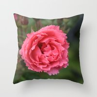 pink wild rose flower in green background. Floral photography. Throw Pillow