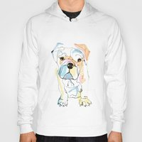 Bulldog Colour Hoody