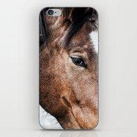 Equine Trance iPhone & iPod Skin
