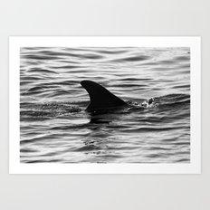 Dolphin Fin  Art Print