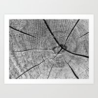 Wood Cracks B & W Art Print