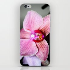 Orchid 2 iPhone & iPod Skin