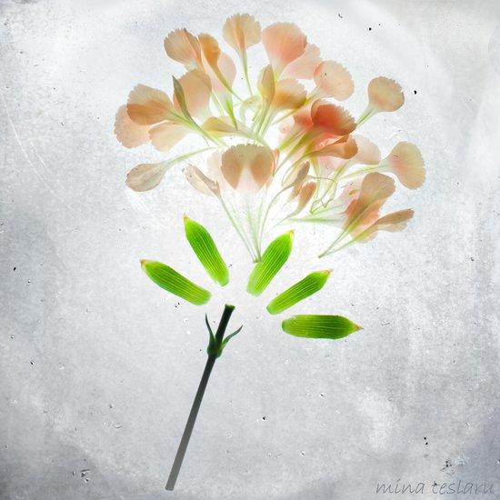 Botanical Blueprints - Carnation Art Print