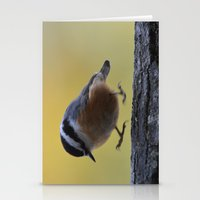 Red Breasted Nuthatch - … Stationery Cards