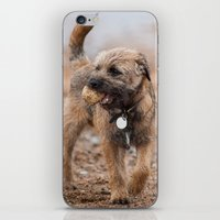 Border Terrier Dog At the Beach Phone Case iPhone & iPod Skin