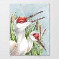 Sandhill Cranes Canvas Print