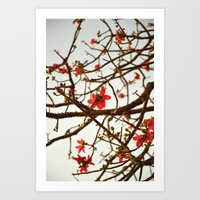 Springtime Bloom - Flame of the Forest Art Print