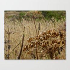 Navaro Bluffs, fall flowers III Canvas Print