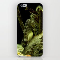 Aquatic Steed iPhone & iPod Skin