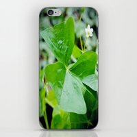 Shamrock season iPhone & iPod Skin