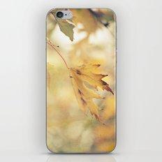 Autumn Yellows iPhone & iPod Skin