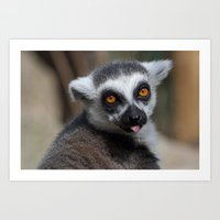Ring Tailed Lemur Art Print