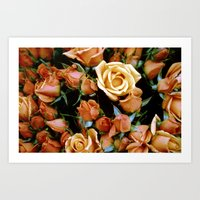 Rosebuds Art Print