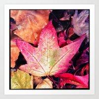 Fall At River Oaks Art Print