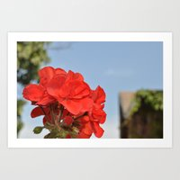 red flowers in my garden Art Print