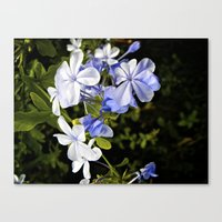 Canvas Print featuring The Blues by SmallIslandInTheSun