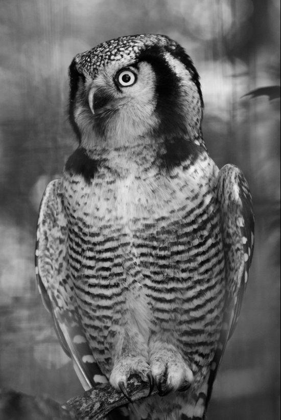 Owl series no.3 Art Print